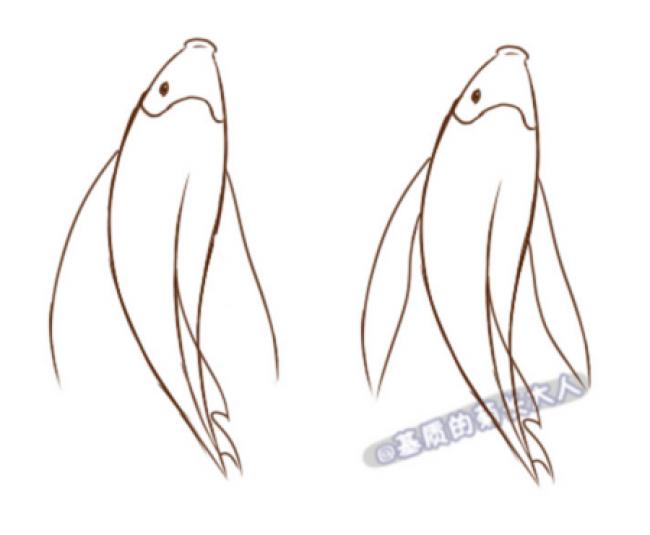 锦鲤鲤鱼怎么画?简单的鲤鱼简笔画卡通画绘画教程