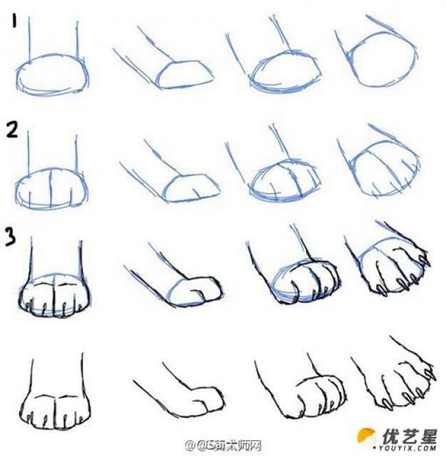 动物的脚,爪子插画绘画技巧 动物脚步各个角度姿势演示结构图片素材