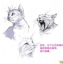 动态可爱的猫咪线稿教程 简单易懂的画猫插画素材 生动大气画法