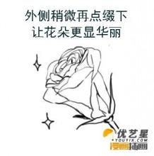 好看的多种玫瑰花怎么绘画? ps带线稿的玫瑰花画画教程插画素材