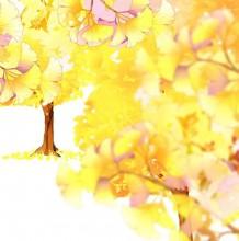 秋天银杏叶子和银杏树怎么画? ps带线稿与上色的银杏叶子树木成品插画教程