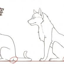 具体的猫咪和狗从五官到姿势详细教程 猫和狗的各种姿势动作区别画法