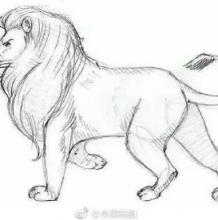 快速画出逼真的狮子简笔画教程图片 简单逼真的狮子怎么画 狮子的画法