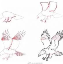 公鸡和老鹰简笔画画法图片 公鸡和老鹰的画法 公鸡和老鹰怎么画