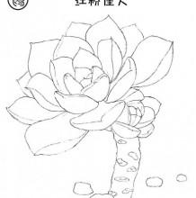 简笔画教你认多肉植物 多肉植物简笔画大全 简单画多肉植物简笔画