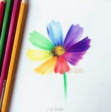 彩铅无彩色花朵上色教程 五色花的手绘画法 漂亮的花朵怎么画