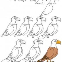 老鹰的简笔画教程图片彩色 老鹰怎么画 老鹰的简笔画画法