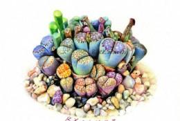 一组超美多肉植物彩铅作品图片 逼真精美的多肉彩铅画图片