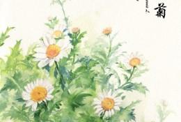 小雏菊水彩画图片教程 带上色步骤和展示