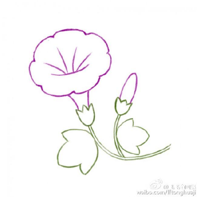 星星姐姐小时候生活在安徽的一个小镇上,家中有一个院子,院子里也没有现在城市里养花的那些各种漂亮的花朵,只有一颗梅花树,还有的就是一篇牵牛花了。有的地方牵牛花也叫做喇叭花,主要是因为它的长相。 这里星星姐姐科普一下: 牵牛( Pharbitis nil(L.)Choisy),属旋花科牵牛属,一年生缠绕草本[1] 。这一种植物的花酷似喇叭状,因此有些地方叫它做喇叭花。种植牵牛花一般在春天播种,夏秋开花,其品种很多,花的颜色有蓝、绯红、桃红、紫等,亦有混色的,花瓣边缘的变化较多,是常见的观赏植物。果实卵球形,
