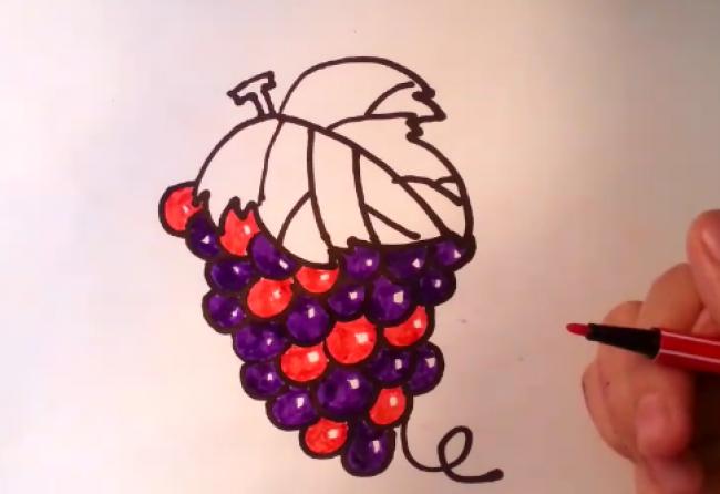 葡萄的简笔画画法 普通儿童画卡通画手绘教程