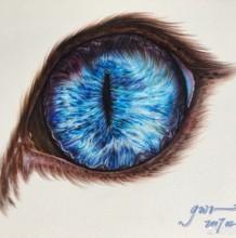 淡蓝色猫眼的彩铅上色过程展示 精致的猫眼彩铅上色教程图片
