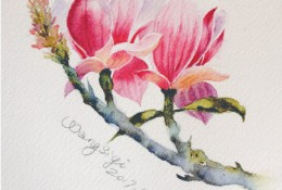 玉兰花水彩上色教程图片 玉兰花水彩画怎么画 玉兰花水彩画的画法