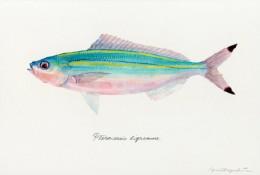 大神级各种鱼的水彩画作品图片 日本水彩画大师Yusei Nagashima 水彩画 