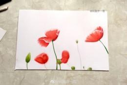 虞美人彩铅手绘教程图片 虞美人花朵怎么画 虞美人的画法