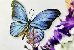 超美蝴蝶彩铅画手绘教程 美丽的蝴蝶简单画 新人也可以上手