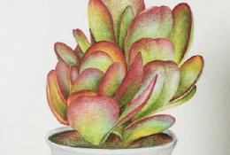 多肉植物彩铅画教程图片细节讲解 上色细节和彩铅笔色号分享
