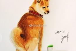 简单的柴犬狗彩铅画画法手绘教程图片 柴犬的画法 柴犬彩铅怎么画