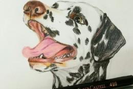 简单点的斑点狗彩铅画手绘教程图片 斑点狗的画法 斑点狗怎么画