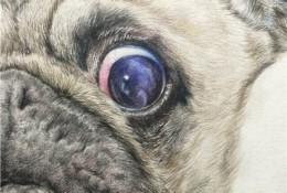 沙皮狗彩铅画手绘教程图片步骤 沙皮狗怎么画 沙皮狗的画法