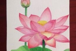 精致的荷花荷叶彩铅画手绘教程图片 莲花彩铅画的画法 荷花怎么画