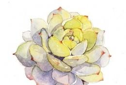各种好看的多肉植物水彩画图片素材 精美多肉水彩怎么画