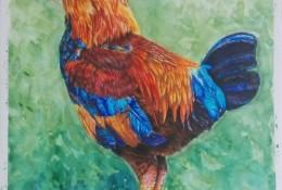 大公鸡彩铅画手绘教程图片 公鸡的彩铅画怎么画 公鸡的彩铅画法