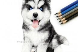 呆萌哈士奇狗宝宝彩铅画手绘教程图片 哈士奇彩铅怎么画 哈士奇的画法