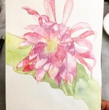令箭荷花水彩画手绘教程图片 令箭荷花水彩画怎么画 令箭荷花的画法