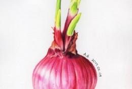 逼真写实的洋葱彩铅手绘画教程图片 很有真实感的洋葱怎么画 画法