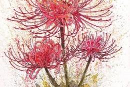 美艳的彼岸花水彩手绘教程图片 带上色步骤 彼岸花水彩画画法 怎么画