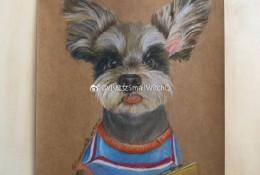 雪拉瑞彩铅手绘画教程图片 狗狗雪拉瑞彩铅画画法 雪拉瑞彩铅的画法