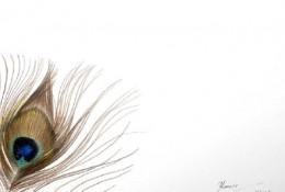 美丽的孔雀羽毛彩铅画手绘教程图片 孔雀羽毛的画法 孔雀羽怎么画