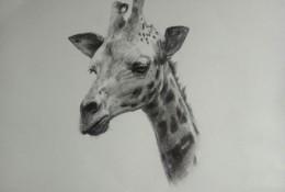 长颈鹿素描画手绘教程图片 长颈鹿素描头像画法 长颈鹿素描怎么画