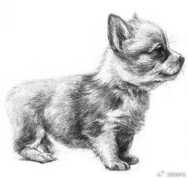 可爱的小狗狗侧身素描手绘画教程图片 小狗狗素描怎么