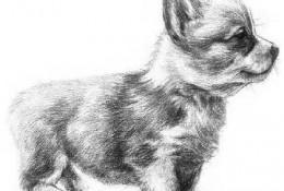 可爱的小狗狗侧身素描手绘画教程图片 小狗狗素描怎么画 狗狗素描画法