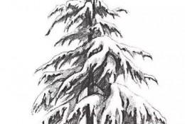 雪松素描手绘画教程图片 雪松树素描怎么画 松树的素描画法
