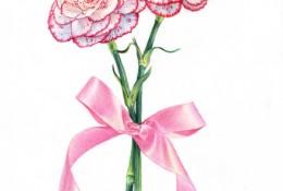 母亲节之花康乃馨彩铅手绘画教程图片 康乃馨怎么画 康乃馨的画法