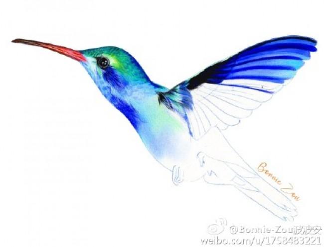 超美蜂鸟彩铅画手绘教程图片 蜂鸟怎么画 彩铅上色步骤 画法