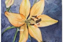 百合花水彩画手绘教程图片 百合花水彩的画法 百合花水彩上色步骤