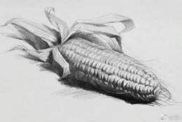 玉米的素描画画法 玉米素描怎么画 玉米素描教程图片步骤