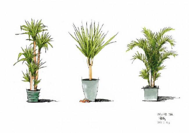 的主人公就是我们的一个绿色的植物。今天我们的作品有点多,是一个作品集的,所以大家要是喜欢绿色植物的绘画的话,不妨可以收藏下来慢慢的绘画。这个还是很不错的。我们今天的作品的颜色是比较单调,但是我们今天的绿植的绘画并不单调。所以我们今天的作品并不单调。还是值得大家绘画一下的。我们今天作品,是一些我们比较常见的一些盆栽,所以大家在绘画的时候不只是可以看着我们的作品来绘画也可以看着我们的真实的作品来进行绘画的。  今天我们的绘画还是有一定的难度的,所以大家在绘画的时候要下一点功夫的喔。还有就是在我们的马克笔绘画里