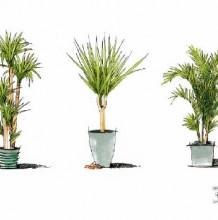 一组植物马克笔表现素材图片 好看的植物盆栽的马克笔上色参考图片