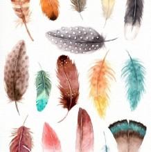 各种精美的羽毛水彩画图片素材 羽毛怎么画素材 羽毛的水彩画法参考