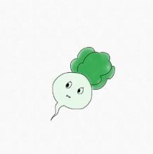 适合小朋友画的可爱蔬菜简笔画合集 幼儿常见蔬菜简笔画画法