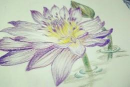 睡莲彩铅画手绘教程图片 睡莲的彩铅画画法 睡莲彩铅怎么画