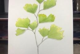 小清新树叶水彩画手绘教程图片 铁线蕨叶子水彩画画法 怎么画