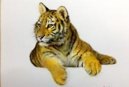 老虎的彩铅画图片 老虎的彩铅画上色过程教程步骤 带线稿