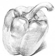 青椒素描手绘教程 蔬菜圆辣椒圆椒素描图片画法教程