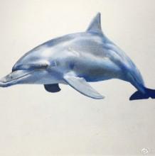 海豚彩铅图片手绘教程 海豚的画法 海豚彩铅怎么画